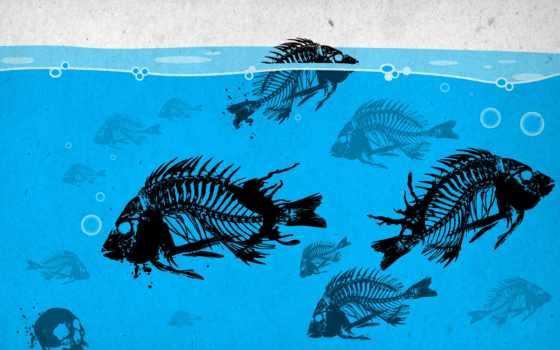 остов, рыбы, кости