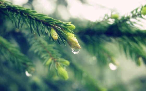 more, alcatel, растительность, are, full, design, plants,