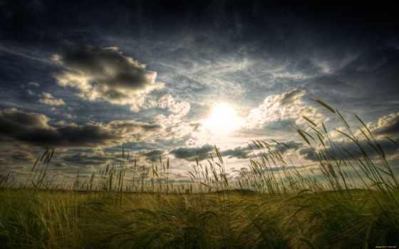 поле, природа, широкоформатные, большие, качественные, пейзажи -, wide,