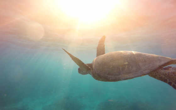 , вода. черепаха, солнце