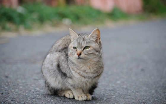 кот, кошки, кошек, улице, улицу, язык, домашних, дороге, portrait,