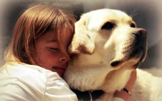 собака, ребенок, собаки