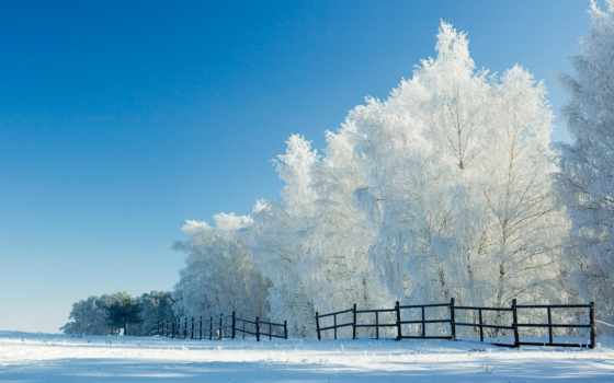 лес, winter, утро