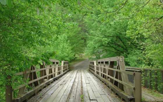 мост, you, лес