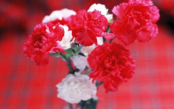 цветы, самая, mobile