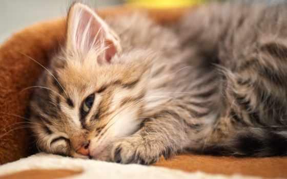котенок, спит, zhivotnye