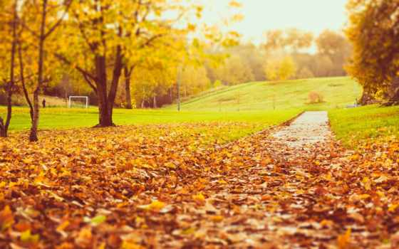 осень, листва, trees, природа, park, желтые, телефон, лес, страница, планшетный, года,