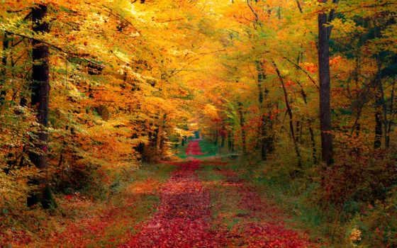 осень, природа, дорога, страница, красиво, лес,