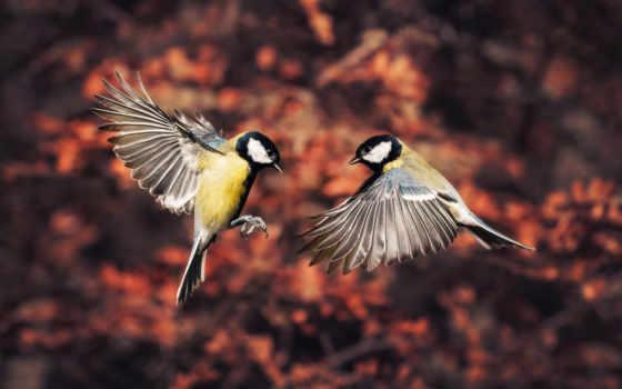 zhivotnye, free, синицы, игры, пчелка, полет, осень,