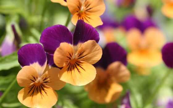 цветы, мире, cvety, самый, красивый, мира, поселение, красивые, новорождественс, сельское,