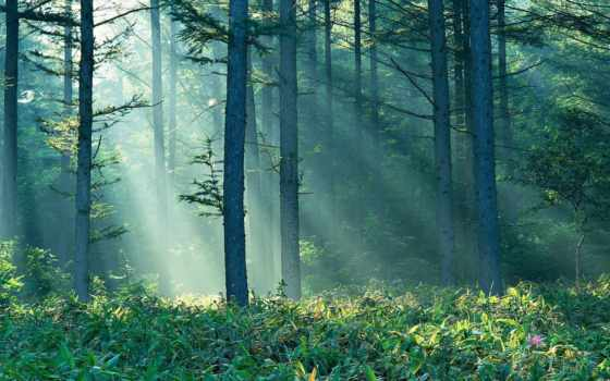 лес, taiga, нояб, усилитель, tall, trees, fotohomka, тайги,