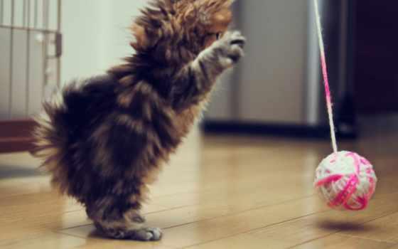 кот, хороший, утро, котенок, love, meme, свою, фотограф, бен, toride, funny