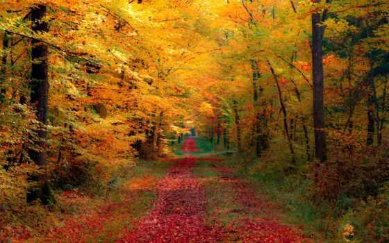осень, природа Фон № 33539 разрешение 1920x1200