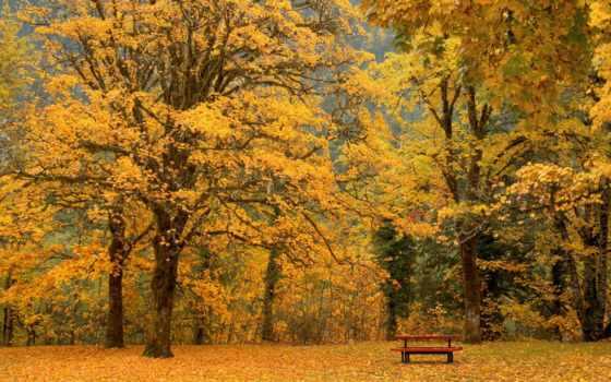 осень, скамейка, листья, осени, умиротворение, деревья, картинка,