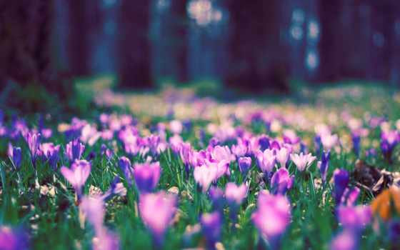 поляна, цветы, деревья