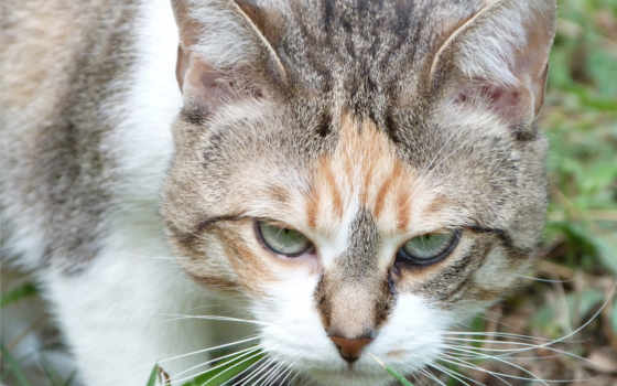 angry, кот, this