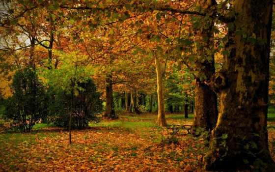 мадрид, осень, испания, campo, park, листья, природа, ствол, trees,