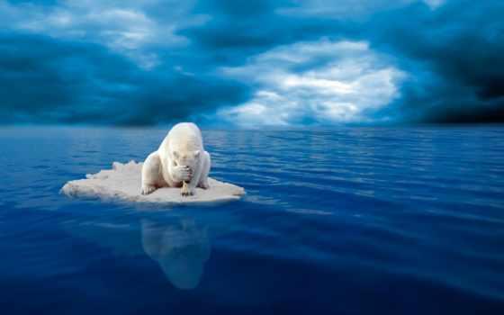 polar, медведь, грустный, bears, cheap, об, warming, animals,