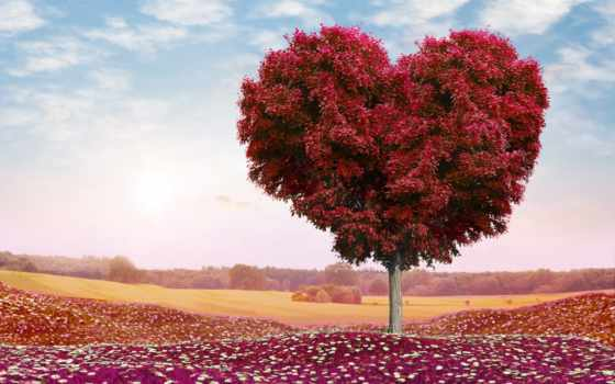 романтика, сердце, поле, святого, дерево, cvety, день, valentine, photoshop, трава, oblaka,