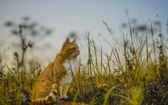 природа, кот, animal, трава, женщина