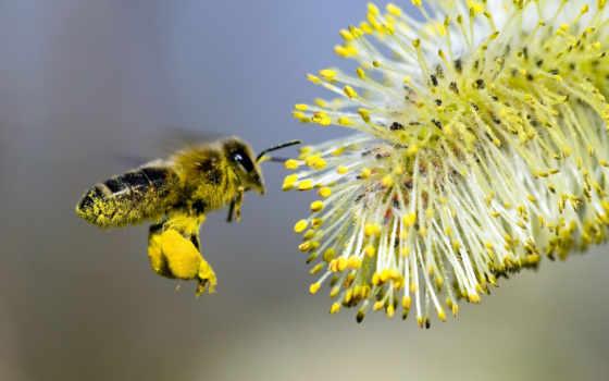 bee, цветок