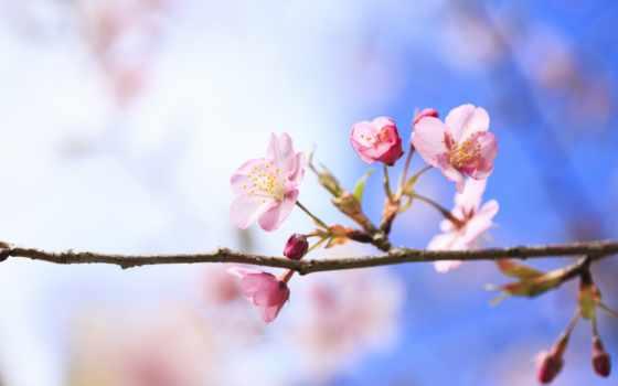 цветы, весна Фон № 27527 разрешение 1920x1200