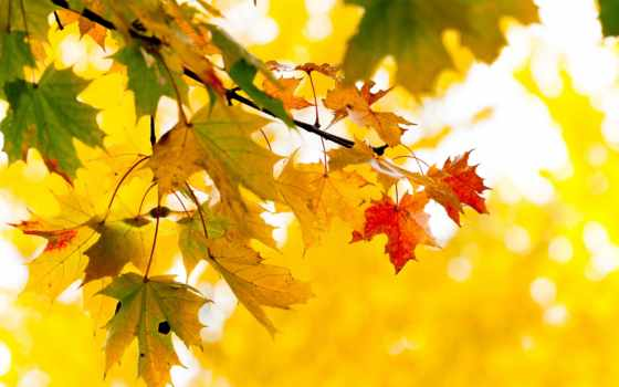 листья, осень Фон № 31729 разрешение 1920x1080