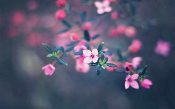 цветы, природа, боке