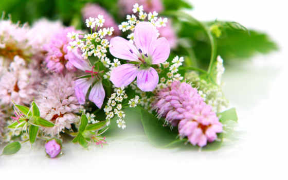 цветы, красивые