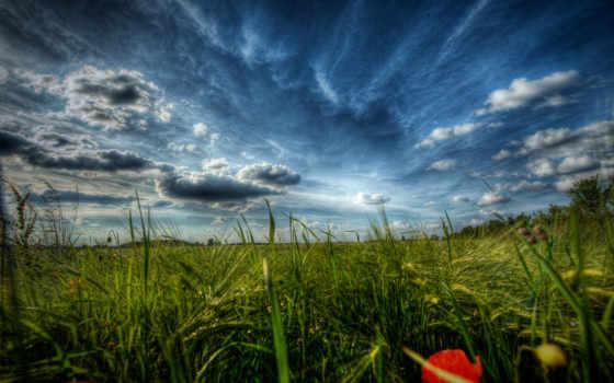 природа, поле, поля