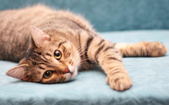 милый котик разлёгся