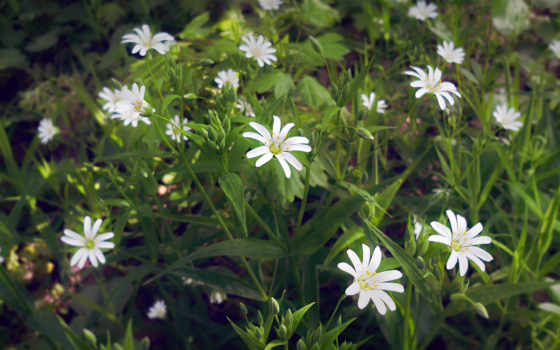 красивые, весна, весну, об, white, статусы, blossoms,
