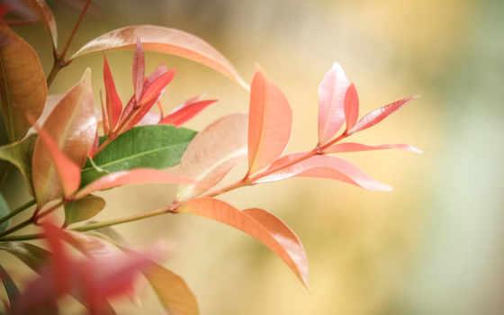 спокойные, world, pinterest, отдохнули, web, wide, цветущие, природа, trees,
