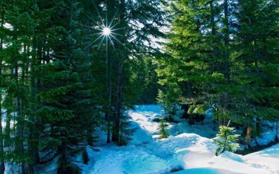 лес, природа, winter, коллекция, пользователя, sun, яndex, картинку, высоком, снег,