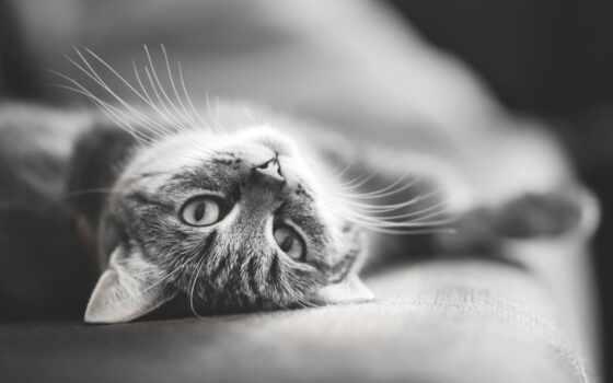white, black, кот, фото, красивый, similar