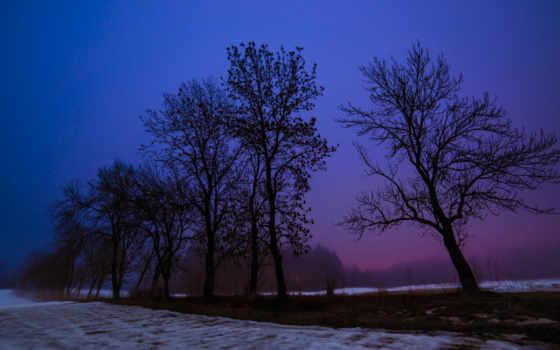 tree, пейзаж