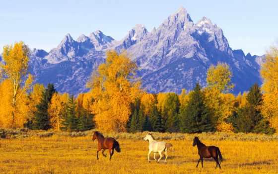 природа, осень, музыка, умирает, осенью, осени, красиво, горы, youtube, горах,