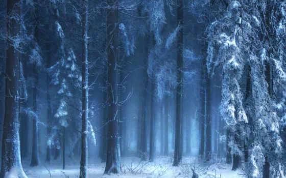 лес, дюймов, winter, природа, заставка, планшетный, туман,