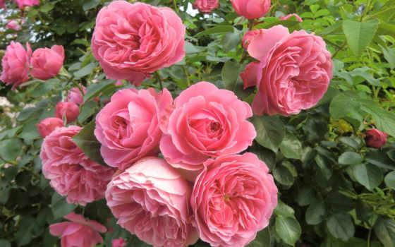 cvety, обычные, красивые, янв, цветов,