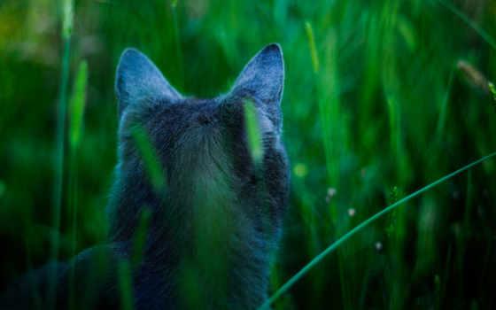 кот, hunter, трава, пепельный, тень, охотник,