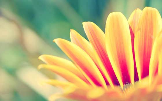 яркий, цветка, cvety, яркие, краски, mac, розы,