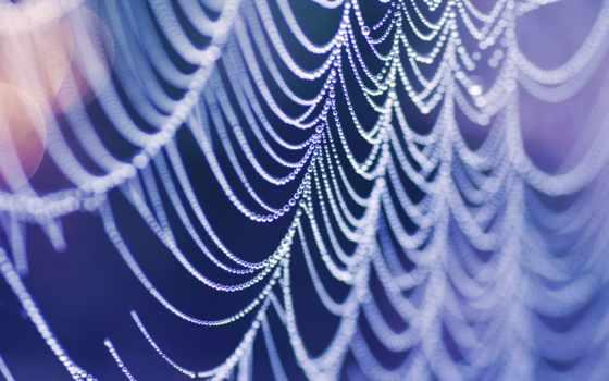 капли, блики, color, паутине, паутины, макрофотографии, web, макро, water, свет, waters,