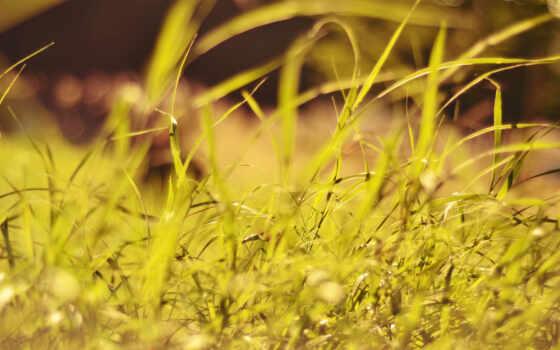 растение, трава, природа, leaf, dimension, landscape