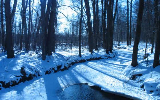 bosque, conífera, boreal, del, superficie, cerca, cubre, representum, tierra, grande, existe