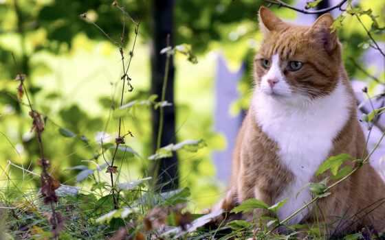 природа, кот, summer, striped, котенок, лист, little, vacation, free, дымчатый