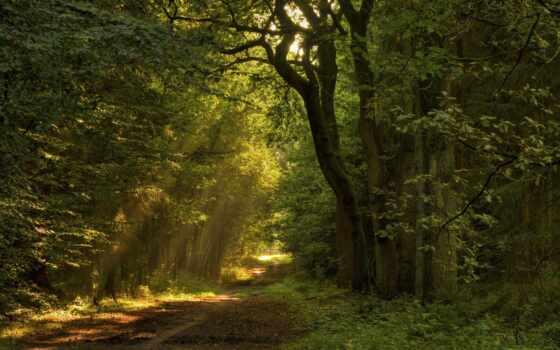 деревья, пейзажи, листья, леса, природа, дорога, тропинка, hallpic, света, лучи, найти,