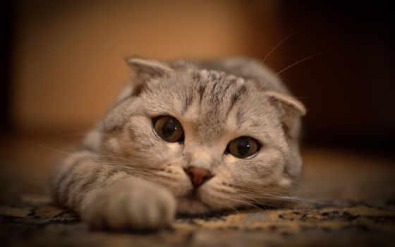 кот, zhivotnye, смотреть