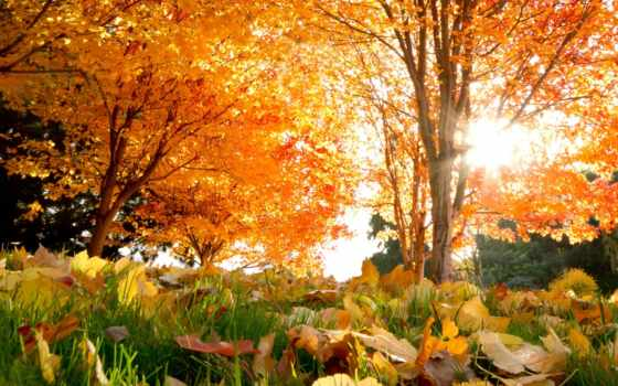 осень, природа, парке, золотая, trees,