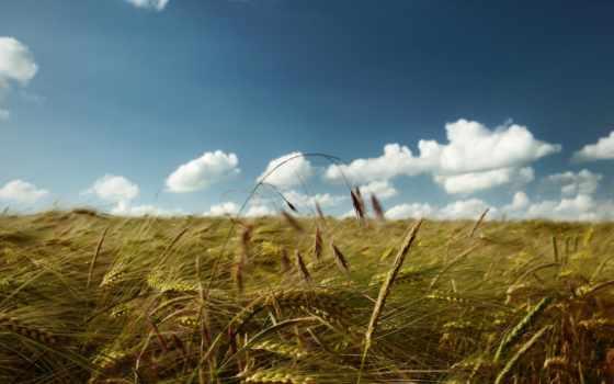 поле, день, margin, getbg, солнечный, зеленое, названием, риса, под,