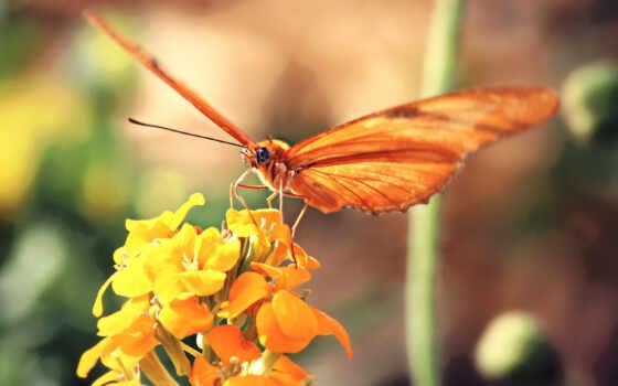 картинка, leaf, бабочка, оранжевый, нить, игла, yellow, цветы
